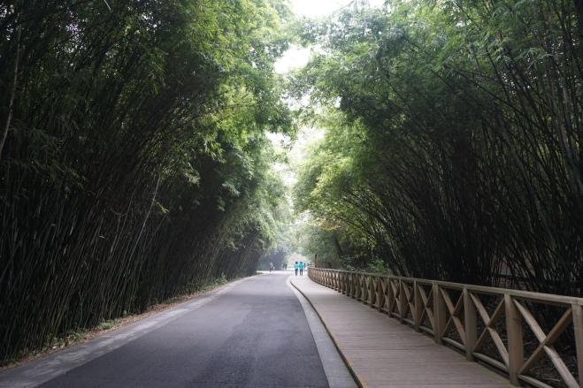 In Chengdu Panda Research Base