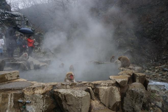 Nagano 9